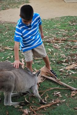 11-28-09 Aidan pets kangaroo