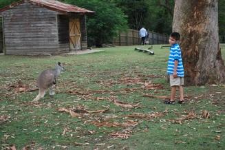 11-28-09 Aidan sizing up kangaroo