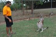 11-28-09 Neerav chats up kangaroo