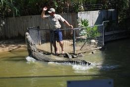 11-29-09 Croc handler & croc in attack show