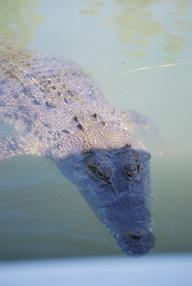 11-29-09 Croc surfaces