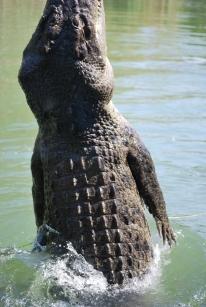 11-29-09 Croc up up