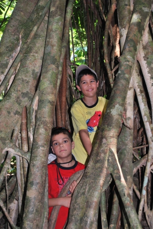 12-1-09 Aidan & Nathan miracle tree