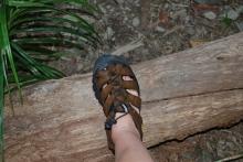 12-1-09 Always step on log