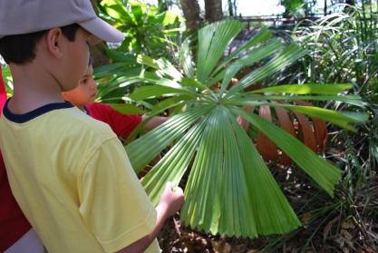 12-1-09 Giant fern