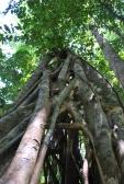12-1-09 Miracle tree vertical