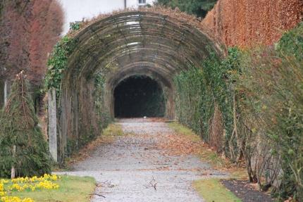 12-17-11 Garden tunnel