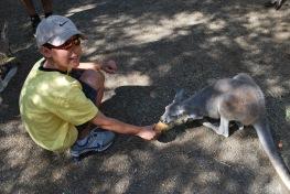 12-4-09 Nathan feeds kangaroo