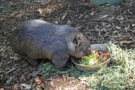 12-4-09 Wombat