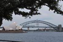 12-5-09 Opera house bridge tree
