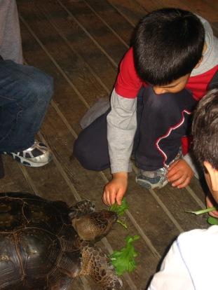 3-29 Aidan feeds turtle