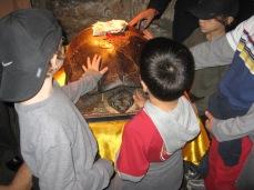 3-29 Boys, 1300 yr old turtle