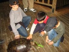 3-29 Boys feed turtle