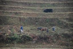 3-30 Men working paddies