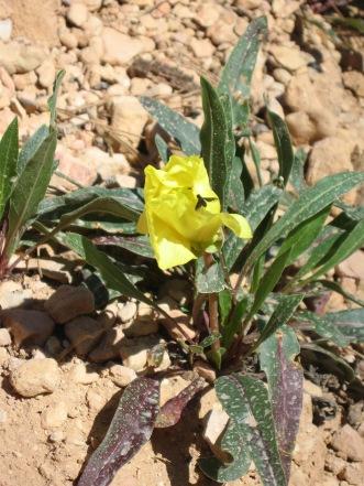 7-19 Wildflower