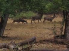 7-22 Mule deer family cropped