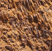 7-28 Sequoia bark CU sized