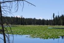 8-14-10 Heron Pond