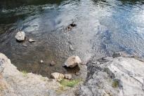 8-10-10 Aidan & Neerav Firehole River