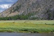 8-10-10 Mule deer meadow