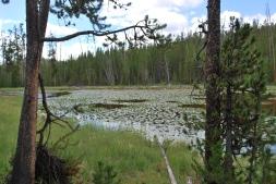 8-13-10 Lily Pad Pond