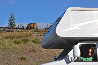 8-14-10 Male elk & RV