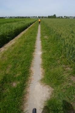 Biking through the wheat fields