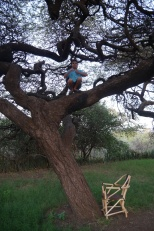 Aidan can't resist a good climbing tree. This one provides the canopy to our campsite.