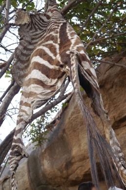 Zebra hide from kill