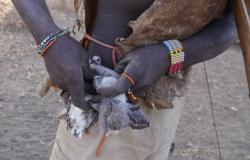 Bushman hangs dead birds on his belt.