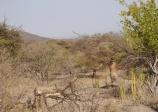 Bushman takes aim.