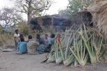 Hadzabe village in the bush
