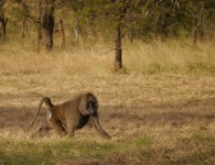 We first met this baboon sitting outside the campground bathrooms. Note: don't mess with baboons!