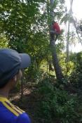 Aidan admires climbing ability of the coconut man.