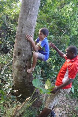Aidan tries to climb coconut tree.