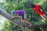 Nathan attempts to climb coconut tree. It's hard!