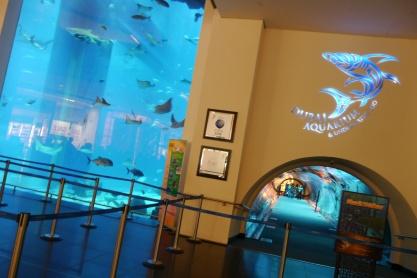 Every mall needs a world-class aquarium specializing in sharks: Dubai Aquarium.