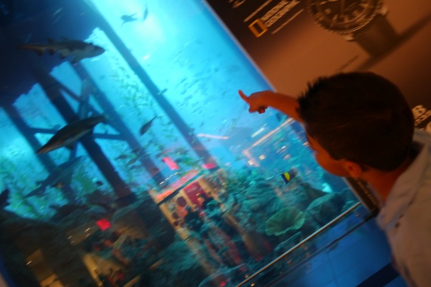 So many sharks... and Aidan could identify every one.
