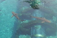 Sharks at the base of Leap of Faith waterslide