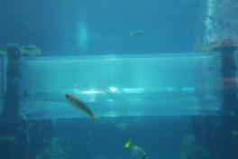That's Aidan in the tube, floating through the shark tank.