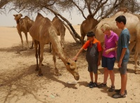 You gotta feel sorry for camels in this heat.