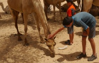 Nathan pets a camel.