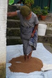 Woman separating some sort of grain