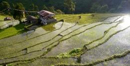 Glistening rice paddies