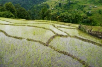There's something very beautiful, yet simple about terraced rice paddies.