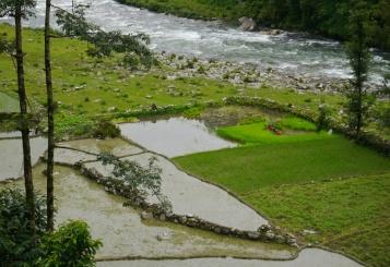 RIce paddies along the Seti River