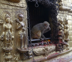 The reason that this place is called the Monkey Temple
