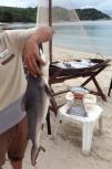 Neerav's dinner - shark