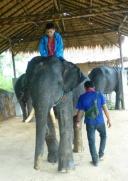 Aidan getting his mahout lesson