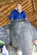 Neerav is wondering if he's going to be able to stay on this elephant